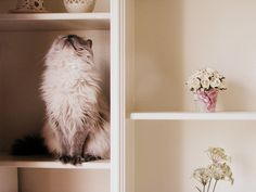 just look up #cat #kitty