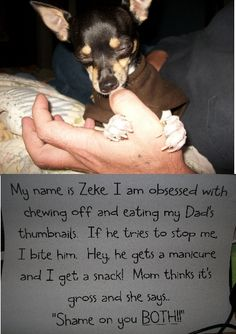 """My name is Zeke. I am obsessed with chewing off and eating my Dad's thumbnails. If he tries to stop me, I bite him. Hey, he gets a manicure and I get a snack! Mom thinks it's gross and she says…""""Shame on you BOTH!!!"""""""