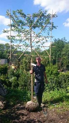 Carpinus Betulus Pleached Hornbeam Trees are deciduous pleached trees creating a neat hedge for above fence or wall screening and privacy. Privacy Trees, Privacy Plants, Garden Privacy, Garden Landscaping, Privacy Hedge, Landscape Design, Garden Design, Baumgarten, Specimen Trees