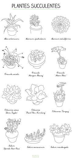 plantes-succulentes-plumetis                                                                                                                                                                                 Plus