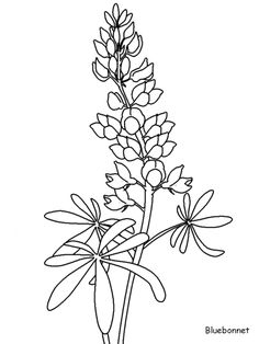 Flower clipart bluebonnet - pin to your gallery. Explore what was found for the flower clipart bluebonnet Drawing Sketches, Line Drawing, Art Drawings, Flower Drawings, Drawing Board, Bluebonnet Tattoo, Ribbon Embroidery, Embroidery Patterns, Watercolor Flowers