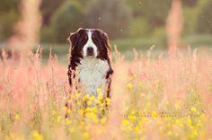 Flowergirl by Tiefenschaerfe on DeviantArt