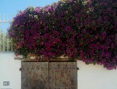 Puerta con flores violetas en Ibiza