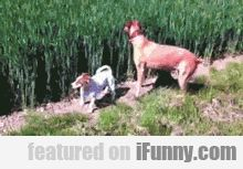 Dog At A Wheat Farm, Some Say He's Still Jump #Funny-Pics http://www.flaproductions.net/funny-pics/dog-at-a-wheat-farm-some-say-hes-still-jump/47520/?utm_source=PN&utm_medium=http%3A%2F%2Fwww.pinterest.com%2Falliefernandez3%2Fgreat%2F&utm_campaign=FlaProductions