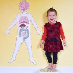 Study the human body anatomy with kids by making an anatomy model with these free printable life-size human body organs! Human Body Crafts, Human Body Science, Human Body Activities, Science Activities For Kids, Human Body Organs, Human Body Systems, Skeleton Body, Body Preschool, Human Body Anatomy
