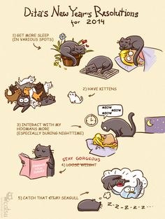 The one about resolutions | Catsu The Cat