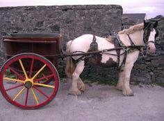 Pony cart rides! Inis Mor