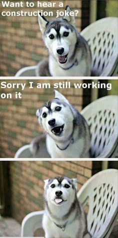 funny animal - dogs