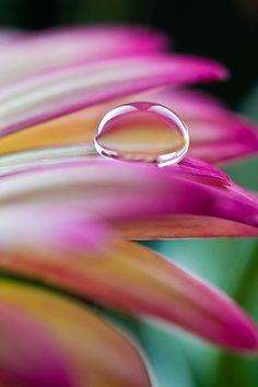 Water Drop on a pink flower Abstract photography idea