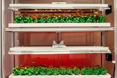 This Indoor Farm Can Bring Fresh Produce to Food Deserts