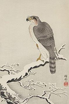 "Japanese Art Print ""Hawk in Snow (Setchu no Taka)"" by Ohara Koson. Shin Hanga and Art Reproductions http://www.amazon.com/dp/B016WFBJ9C/ref=cm_sw_r_pi_dp_0Ictwb1QC49R1"