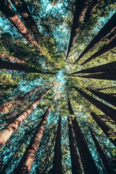 ▷ 1001 + spring landscape photos to celebrate the awakening of nature-- Beautiful image for free wallpaper spring, green forest and blue sky image spring, original perspective photo forest crowns of pine trees Beautiful Places, Beautiful Pictures, Beautiful Scenery, Inspiring Pictures, Beautiful Forest, Amazing Photos, Beautiful Flowers, Nature Aesthetic, Belle Photo
