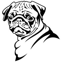 Cute And Funny Pug Vinyl Decal