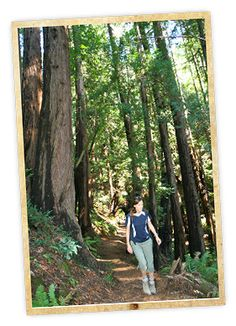 Hike Muir Woods, Special Trail - Ocean View Trail and the Tourist Club Trekking Holidays, Main Gate, Canoe, Outdoor Activities, Serenity, Exploring, Crowd, North America, Woods