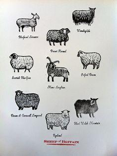 """Sheep of Britain"" by Jazmin Velasco (wood engraving) Shire, Sheep Face, Sheep Tattoo, Wool Quilts, Velasco, Clip Art, Wood Engraving, Animal Drawings, Animal Illustrations"