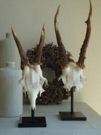 Hertenkop gewei skulls geweien en for Decoratie hertengewei