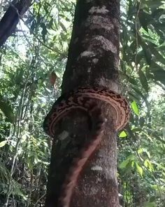 Wildlife Nature, Nature Animals, Animals And Pets, Funny Animals, Cute Animals, Pretty Snakes, Beautiful Snakes, Beautiful Creatures, Animals Beautiful