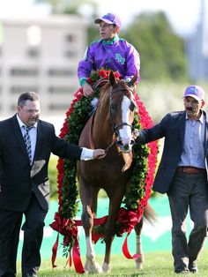 California Chrome Kentucky Derby winner 2014...sweet baby boy!!! good luck at the Preakness!!!
