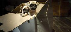 Signe notre pétition et demande à eBay Classifieds Group de devenir pionnier dans la protection des animaux et de leurs acquéreurs.