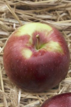 Jonamac - 6 Types of Best Apples for Cooking and Baking.