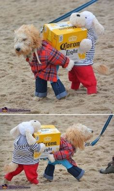 15 Funny & Creative Halloween Dog Costumes Have you ever seen a super. - Seko - 15 Funny & Creative Halloween Dog Costumes Have you ever seen a superhero dog? Cute Funny Animals, Funny Animal Pictures, Cute Baby Animals, Funny Cute, Funny Dogs, Super Funny, Animal Pics, Animals Dog, Animal Memes