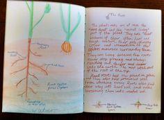 5th grade ~ Botany ~ Roots ~ main lesson book