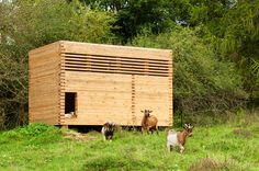 Timber Barn for goats