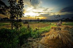 Around Ubud - Bali