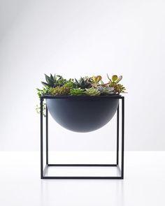 Matte black planter makes the succulents pop❤️