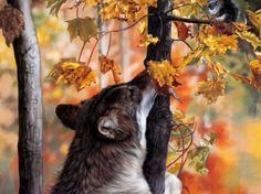 Wolves in the Forest - animal, forest, autumn, squirrel, wolves, trees