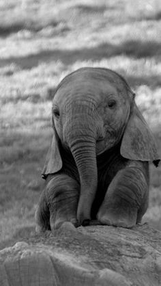 Hi little elephant baby! Awww