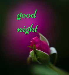 Good Night Greetings, Good Night Wishes, Good Night Sweet Dreams, Nighty Night, Daddy, Life Quotes, Thoughts, Words, Good Night