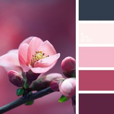 This palette includes all those colours (light and dark pink, burgundy, rich dark blue-green and classic white), that we can see and enjoy when the cherry. These colors can give you ideas on deco. Colour Pallette, Colour Schemes, Color Patterns, Color Combos, Rose Gold Color Palette, Dark Grey Color, Pink Color, Dark Blue, Cream Colour