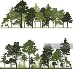 Vectorkunst : Conifer trees forest