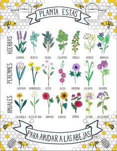 Bee-friendly herbs, perennials and annuals. SAVE THE BEES! No bees, no food. Stop using chemicals!