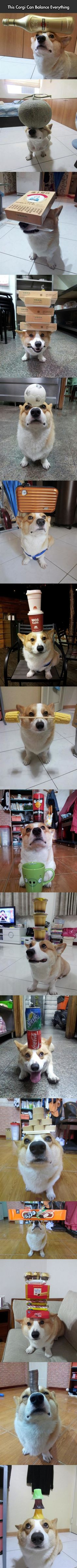 As if we needed yet another reason why Corgis are awesome.