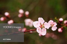 Yooniq images -