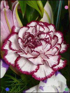 Shade Garden Flowers And Decor Ideas Flower Photos