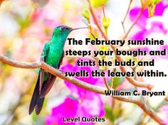 """February Quotes https://levelquotes.blogspot.com.br/2018/02/february-quotes.html """"The February sunshine steeps your boughs and tints the buds and swells the leaves within."""" - William C. Bryant #february #quotes #valentinesday"""