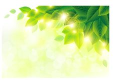 Spring sunlight with green leaves background vector 01