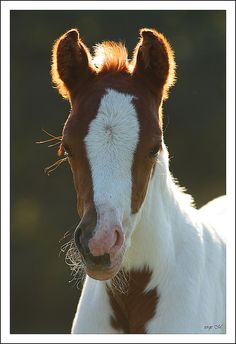 baby paint!  Looks just like the one at my barn.  So cute!