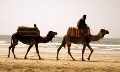 Camel Trek along Morocco's Atlantic Coast Agadir Morocco, Camels, Big Sur, Trekking, Just Go, Coast, Tours, Beach, Travel