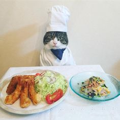 Cat Dresses As Cook For Elaborate Meals, Gets Our Compliments To The Chef - Petcha Neko, Cute Cats, Funny Cats, Benadryl For Cats, Dog Emoji, Warrior Cats Books, Herding Cats, Cat Cosplay, Cute Creatures