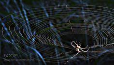 Spider's web 3 by gec9. @go4fotos