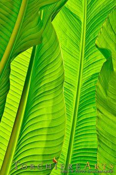 Set of 3 Prints, Tropical Leaves Set, Banana Leaf, Set of 3 Wall Art, Set of 3 t… - Home Decor Ideas Tropical Home Decor, Tropical Colors, Tropical Houses, Tropical Leaves, Tropical Furniture, Tropical Interior, Tropical Art, Tropical Garden, Tropical Plants