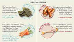dog treats vs poison: a pet health infographic >vet-medic.com