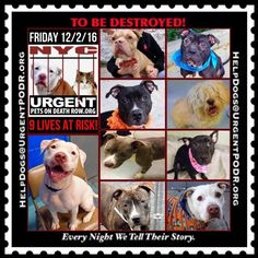 "9 BEAUTIFUL LIVES TO BE DESTROYED 12/02/16   @ NYC ACC **SO MANY GREAT DOGS HAVE BEEN KILLED: Puppies, Throw Away Mamas, Good Family Dogs. This is a HIGH KILL ""CARE CENTER"" w/ POOR LIVING CONDITIONS.  Please Share:    To rescue a Death Row Dog, Please read this: http://information.urgentpodr.org/adoption-info-and-list-of-rescues/"