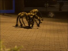 4gifs:  Spiderdog prank. [video]