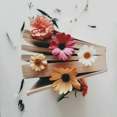 flowers and pages by unknown