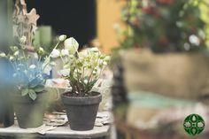 Eindrücke aus unserem Geschäft zum Thema Advent :-) by Elke Kamaritsch - www.blumenelke.at